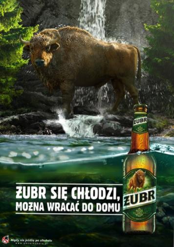 Idzie lato, Żubr się chłodzi.  Ruszyła nowa kampania reklamowa Żubra!